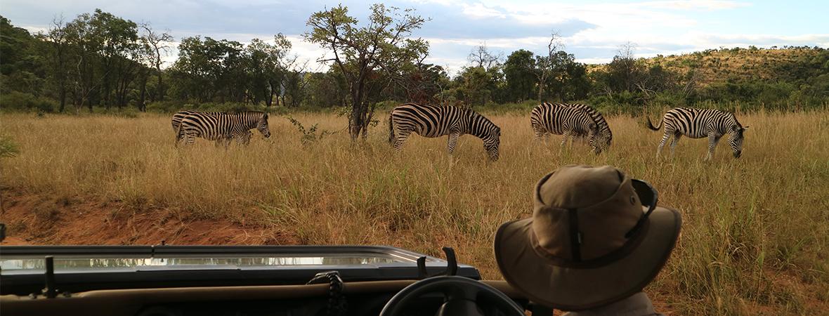 五感で感じる南アフリカ
