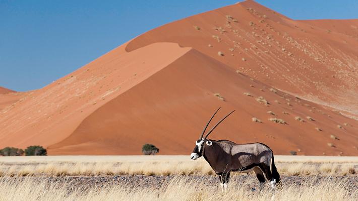 ラグジュアリーな冒険の旅  ナミビア9日間