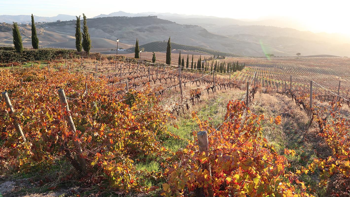 ワインとの出会い、そしてワインと巡る世界の旅