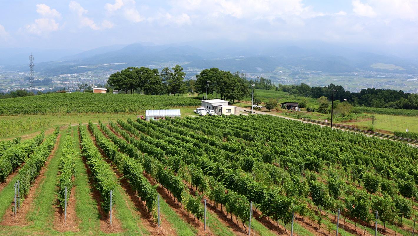 ワインと巡る日本の旅【前編】
